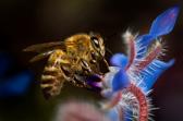Bee_2015_v1.jpg