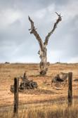 Tree-01_2_3_v1.jpg